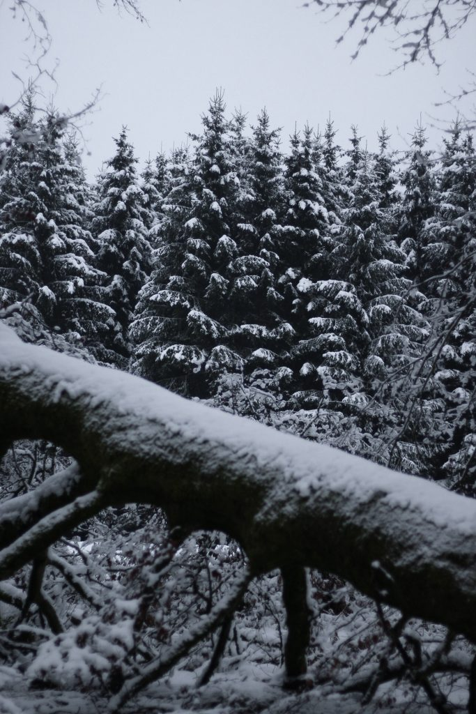 snow covered trees, road trip, winter wonderland