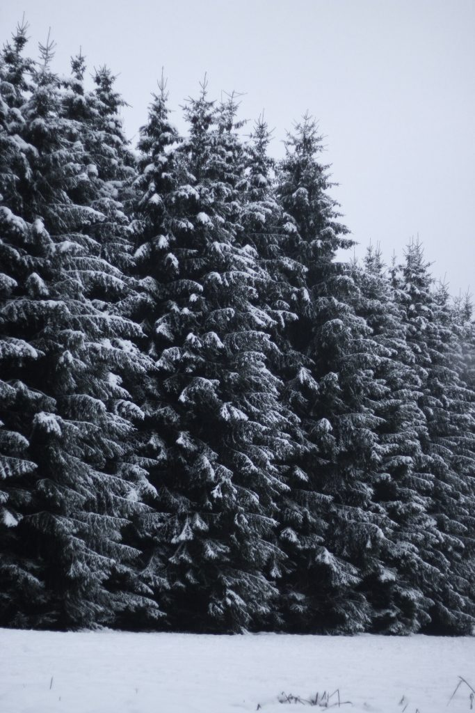 trees in the snow, road trip, winter wonderland