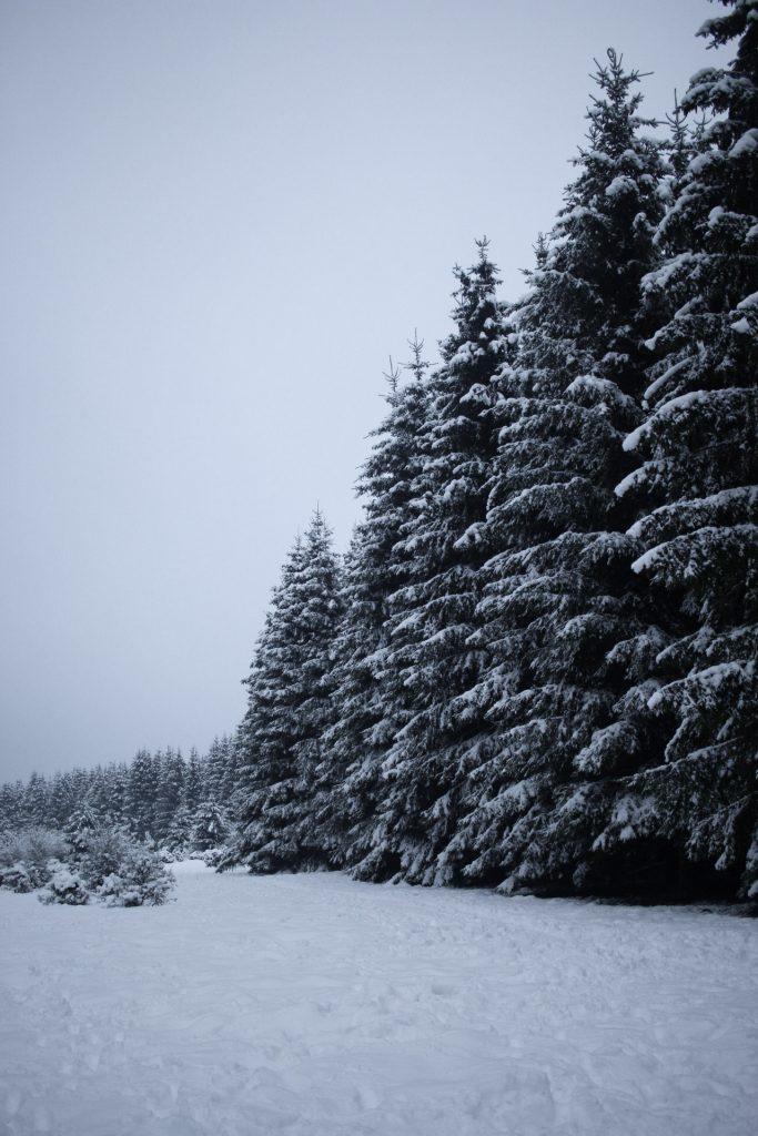 Snowy landscape, snow covered trees, road trip, winter wonderland