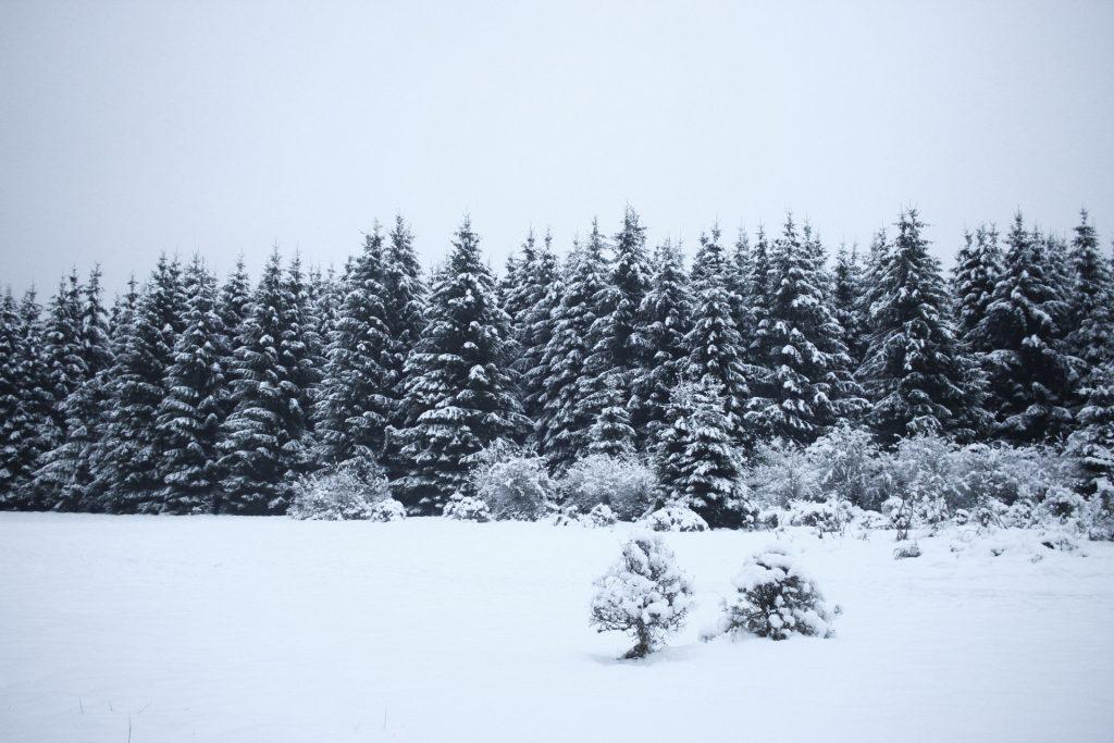 Snowy landscape, road trip, winter wonderland