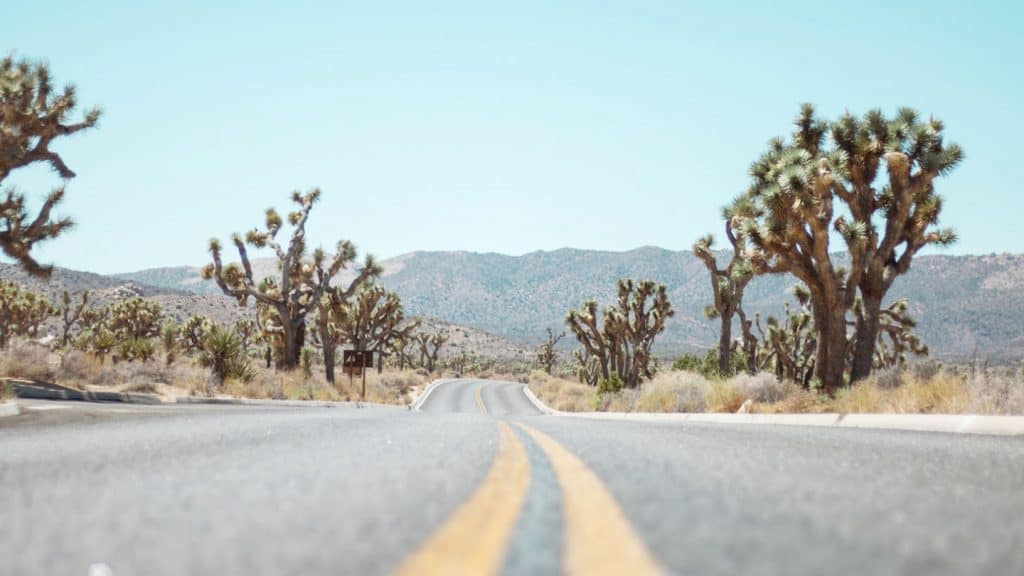 road in Joshua Tree NP
